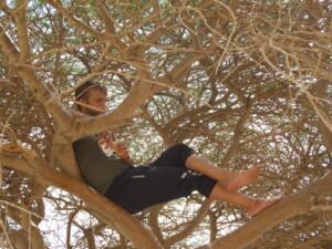 David slapper af i træet krone