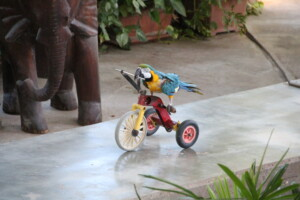 Cyklende papegøje